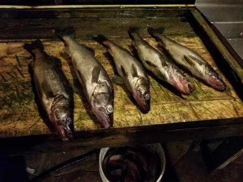 Camichigama-Fishing-34