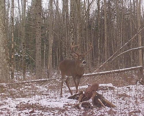 Ontario Deer Other